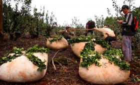 Productores del NEA, rechazan creación del Fondo Yerbatero