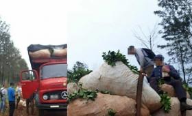 Retuvieron un camión que llevaba tareferos sobre la carga de yerba