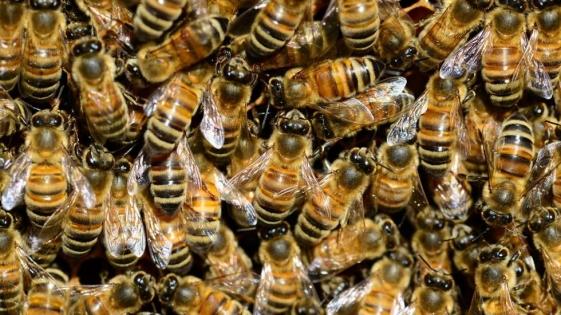 Rescatan a joven de habitación infestada de abejas