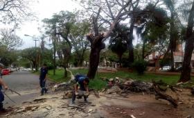Cortaron un árbol que estaba a punto de caer