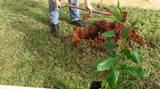 Plantaron 9000 especies de árboles en 10 meses