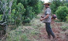 INYM financia máquinas para trabajar en yerbales y en la interzafra