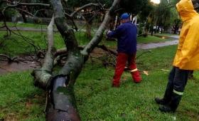 El temporal tumbó árboles en Posadas