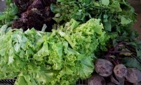 """""""Alimentación saludable"""" en el Mercado Concentrador"""