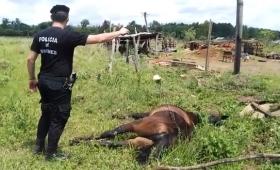 Electrificó la cerca de la olería y mató a una yegua