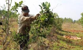 Solo 2 mil tareferos cobran subsidio interzafra