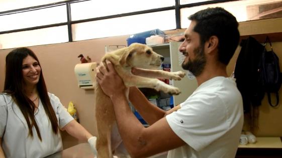 El IMuSA invita a vecinos a adoptar mascotas