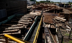 NEA: Paraguay importaría madera de Corrientes para planta de celulosa
