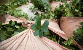 Nación fijó en $11,55 el kilo de hoja verde y en $43,89 la canchada