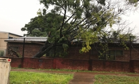 Cayeron dos árboles sobre una escuela de Villa Cabello