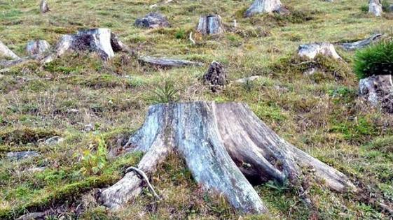 Chaco es la provincia que más se deforestó desde 2015