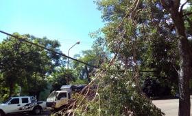 Rama colgando de cable de alta tensión causa temor