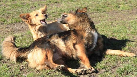 Detuvo una pelea de perros y su vecino lo apuñaló