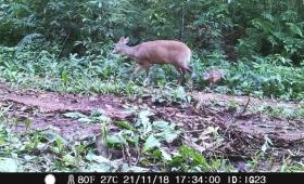Registran más de 430 imágenes de fauna en el Parque Iguazú
