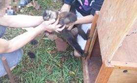 Rescataron a un monito cautivo como mascota