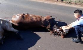 Camión chocó a dos caballos frente a la biofábrica