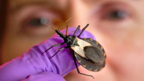 La OMS oficializó el Día Mundial del Chagas