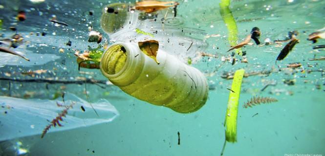 45b659b9f O la decisión del intendente del General Pueyrredón, Carlos Arroyo, que el  mes pasado decretó la prohibición del uso de plásticos, como sorbetes, ...