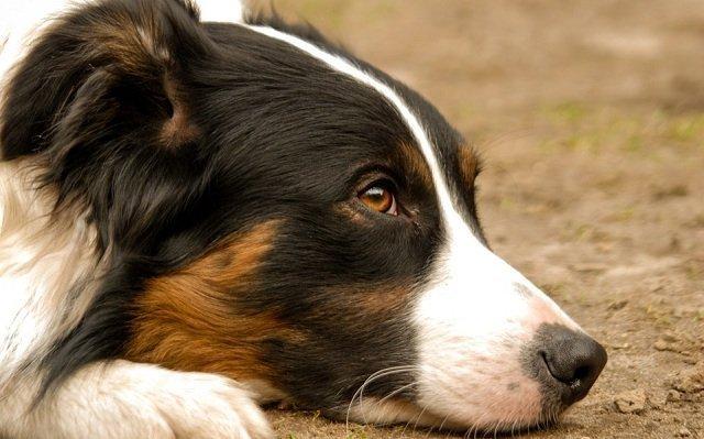 Los perros sincronizan sus niveles de estrés con los de sus dueños