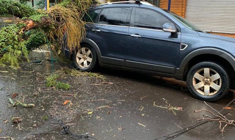 Fotonoticia: cayó un viejo árbol sobre un auto