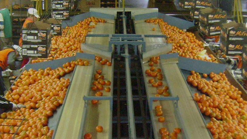 Alem: reclamos por sueldos atrasados en la Cooperativa Citrícola