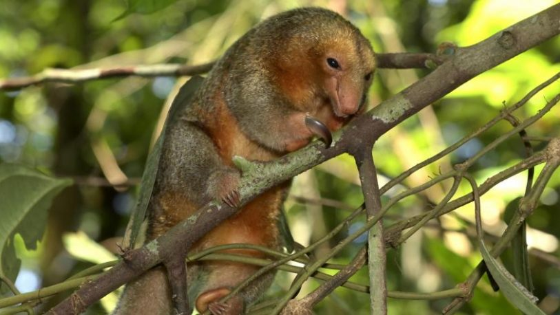 Descubren nuevas especies de flora y fauna en el Amazonas