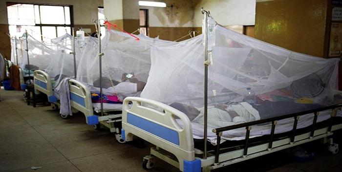 Brote de dengue en Bangladesh deja 40 muertos y 50 mil contagiados