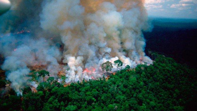 """Señalan al Amazonas como """"el pulmón más importante del mundo"""""""