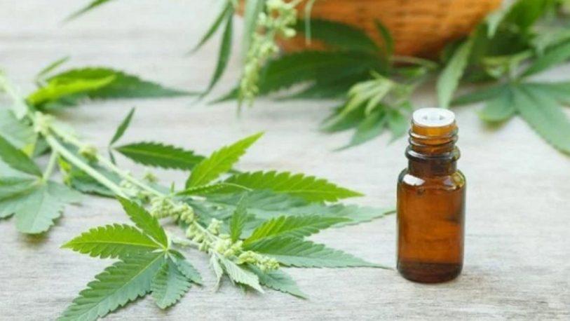 """Aumenta """"día a día"""" el uso del cannabis medicinal en Corrientes"""