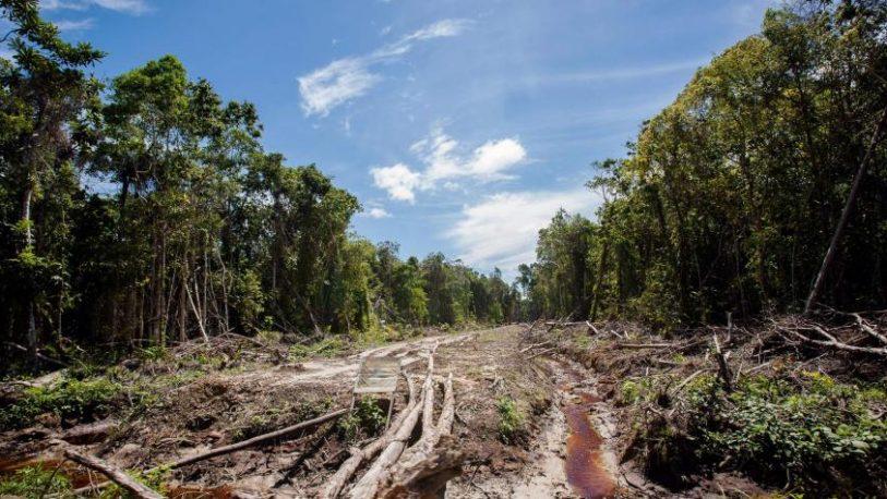 Amazonia: Presentan un millón de firmas contra la deforestación