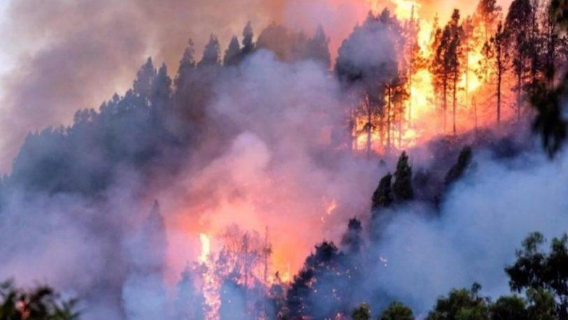 """El Amazonas en llamas: """"El modelo que impera en el planeta tiene consecuencias"""""""