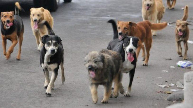 Advierten sobre los riesgos de las parasitosis asociadas al contacto con heces de perros