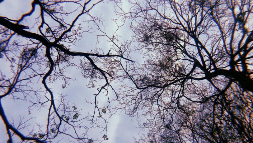 Tiempo: nubosidad variable y caluroso