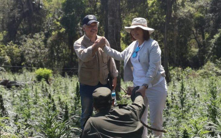 Paraguay y Argentina destruyen 100 hectáreas de marihuana