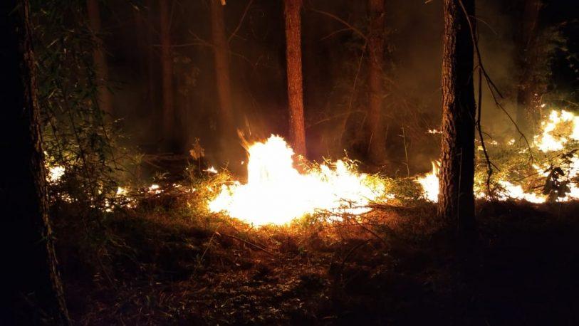 Incendio en un pinar de Panambí