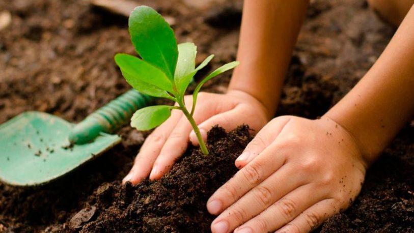 Invitan a celebrar la primavera plantando un árbol