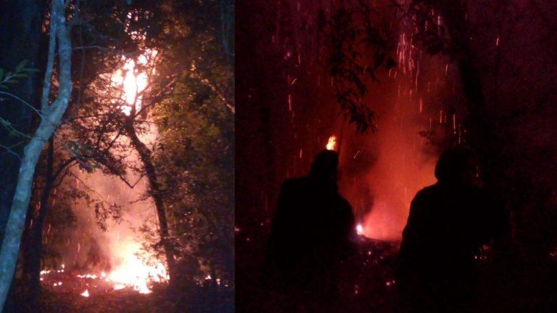 Se incendió uno de los árboles más antiguos de Misiones