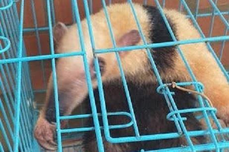 Rescataron un oso hormiguero en El Soberbio