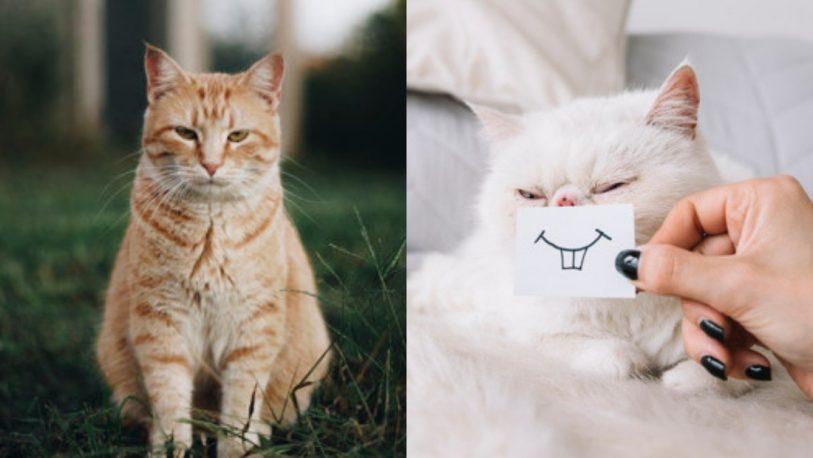 Afirman que los gatos imitan la inestabilidad emocional de sus dueños