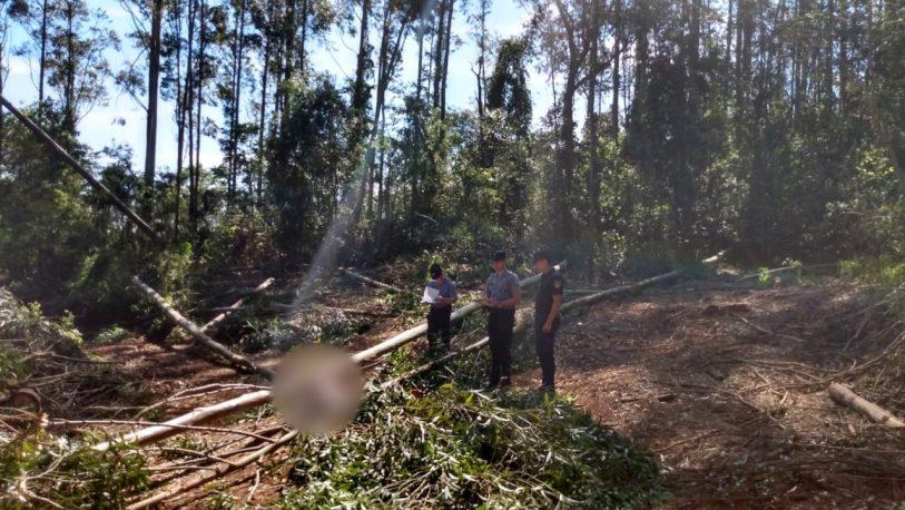Trabajador murió aplastado por un rollo de eucalipto