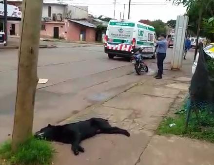 Motociclista chocó a un perro y debió ser hospitalizado