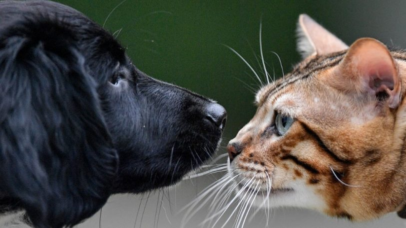 Perro o gato: cuál es mejor para convivir contigo