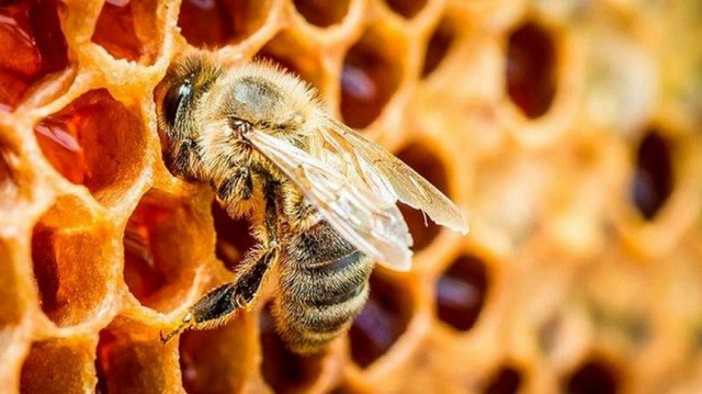 Perros muertos por picaduras de abejas