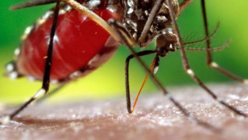 Dengue: se registraron tres casos en el periodo interbrote