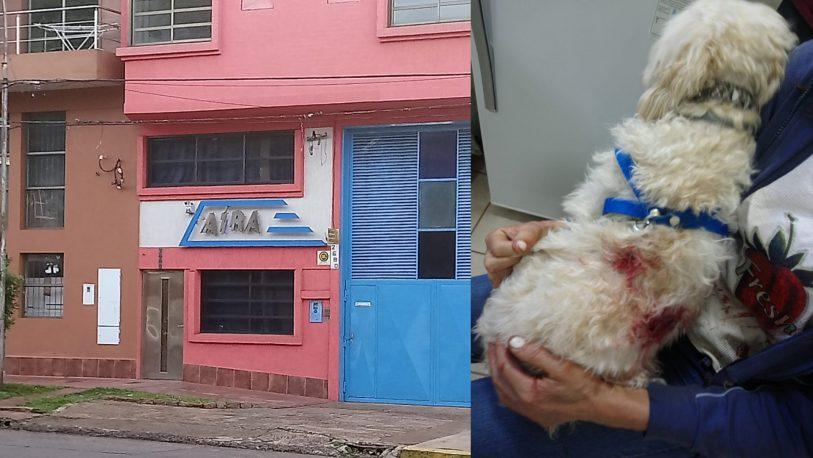 Denuncian a empresario por salvaje ataque con perros en la vía pública