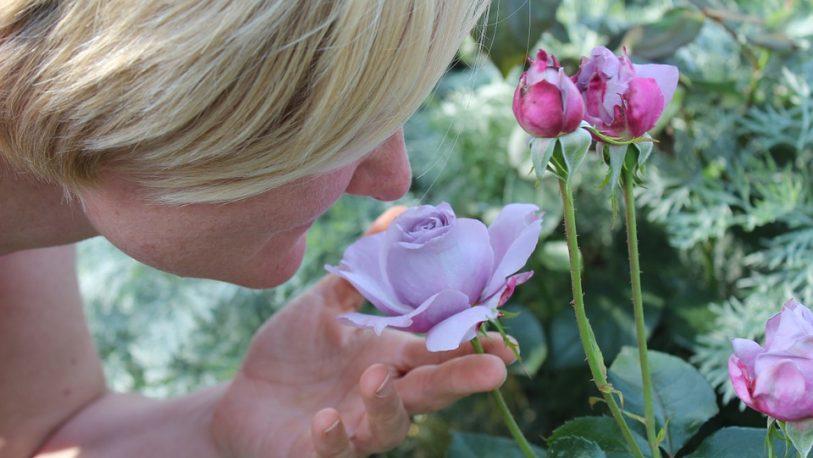 El olfato distingue mejor una mezcla de olores que uno individual