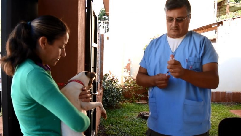 Mascotas: se hicieron 13. 398 castraciones y aplicaron 14.000 vacunas