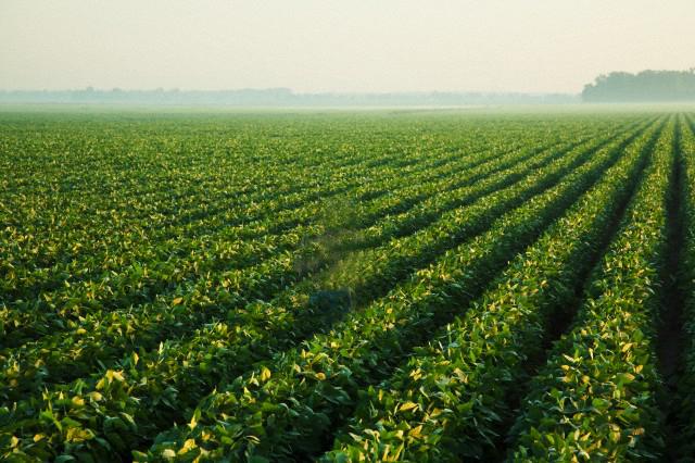 Joven falleció tras un accidente cuando cosechaba té