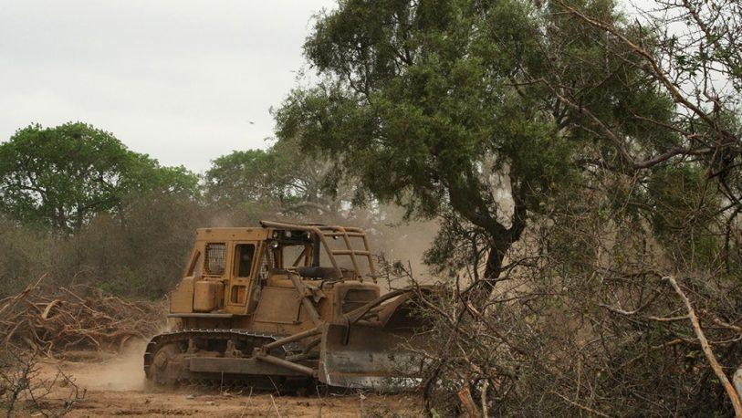 Desmonte en el NEA – NOA: talaron más de 80.000 hectáreas de bosques nativos
