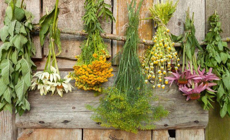 Cuáles son las 10 hierbas medicinales que no pueden faltar en casa